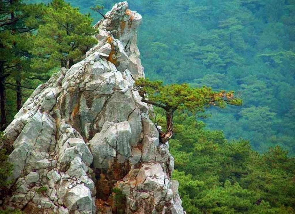 Парки, зоны отдыха, заповедники Ялтинский горно-лесной заповедник Ялта Ялтинский заповедник